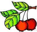 Siberian crab apple.