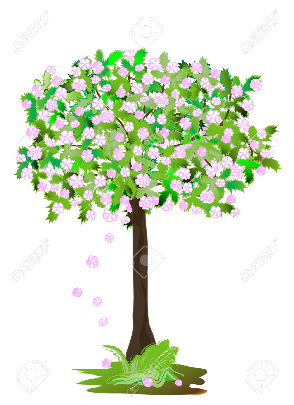 Showy Crab Apple, Object White Isolated, Royalty Free Cliparts.