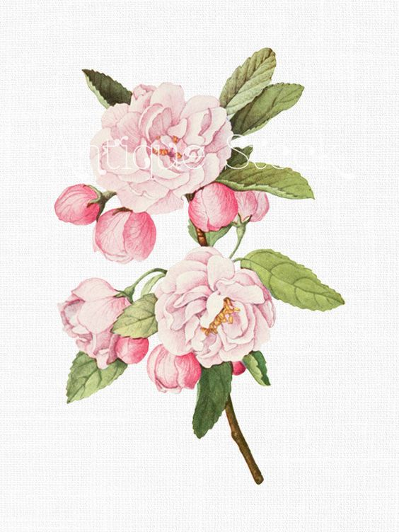 Crafts, Crab apples and Pink flowers on Pinterest.