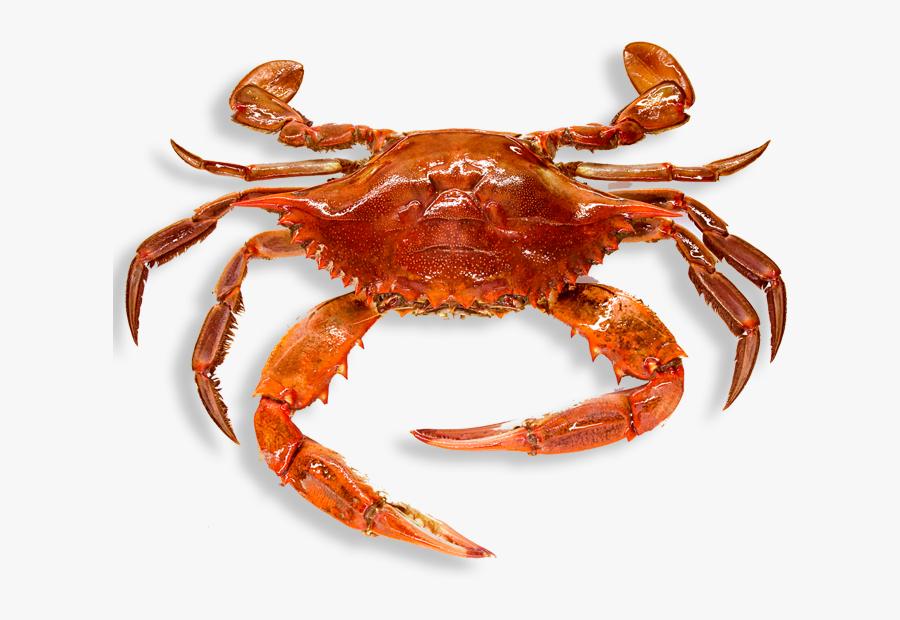 Crab Clipart Border.