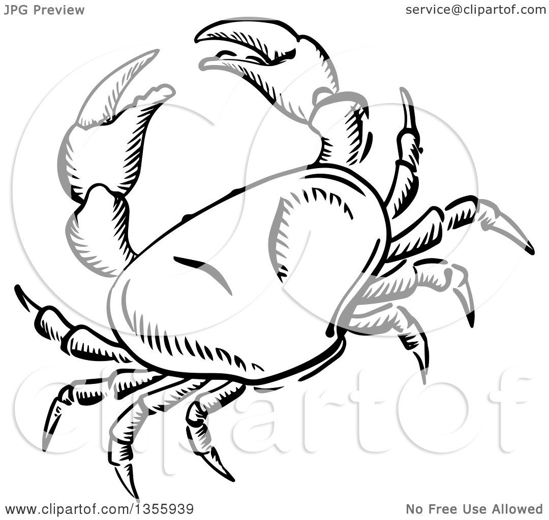 Clipart of a Black and White Sketched Crab.