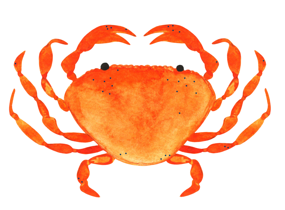 Seafood clipart crab feed, Seafood crab feed Transparent.