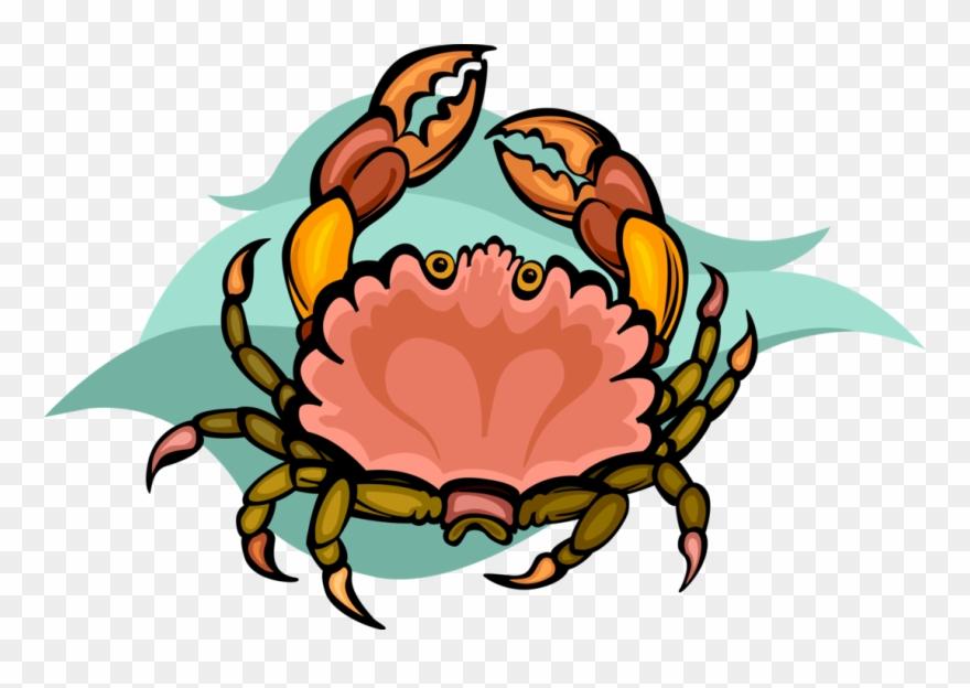 Vector Illustration Of Decapod Marine Crustacean Crab.