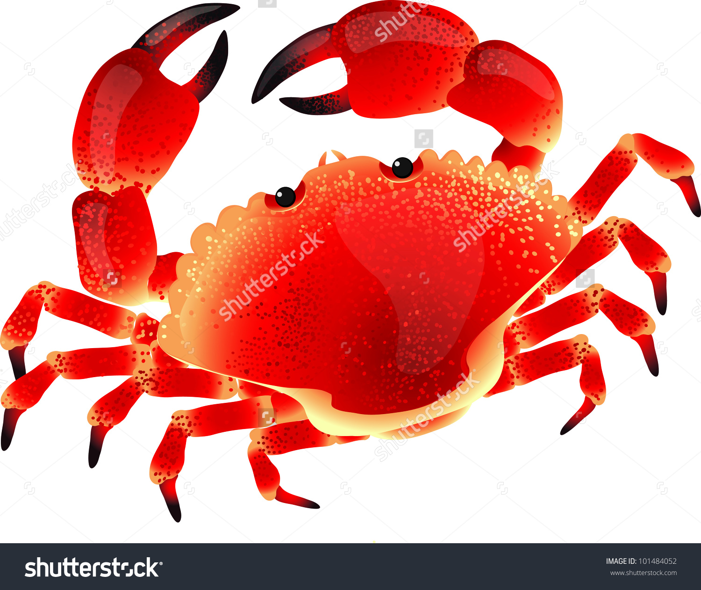 Vector Crab Stock Vector 101484052.
