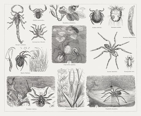 Crab Spider Clip Art, Vector Images & Illustrations.