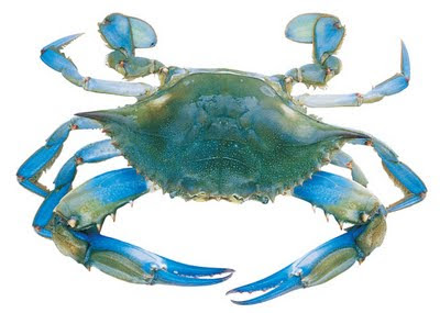 GONE CRABBING. Gone crabbing..