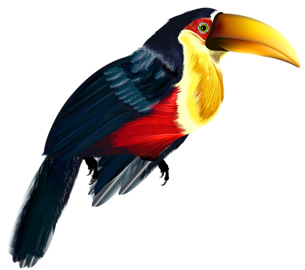Stork PNG Clipart.