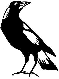 Australian Magpie.