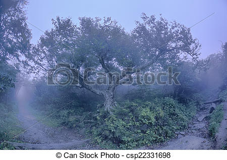 Stock Photographs of Craggy Gardens North Carolina Blue Ridge.