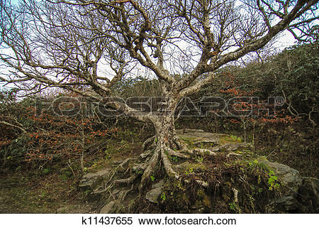 Stock Image of craggy gardens nc k11437655.