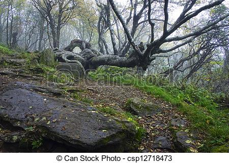 Picture of Gnarly Tree in Craggy Gardens.