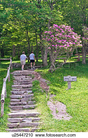 Stock Photography of craggy gardens picnicking picnic area grounds.