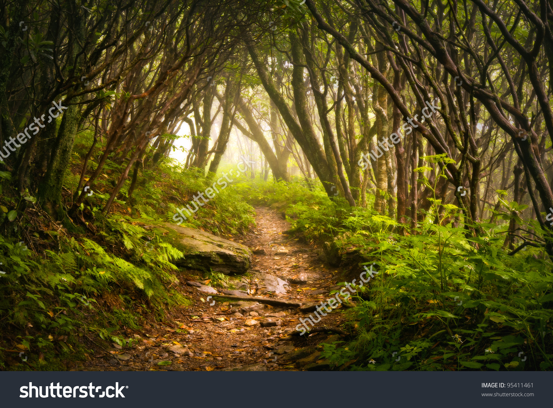 Craggy Gardens Appalachian Hiking Trail Fog Stock Photo 95411461.