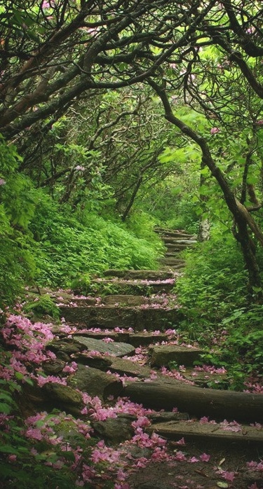 1000+ ideas about Craggy Gardens on Pinterest.