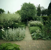 Picture of White lychnis and cardoon in grey summer border with.