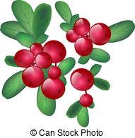 Cranberries Stock Illustration Images. 1,970 Cranberries.