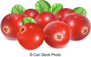 Cranberries Stock Illustration Images. 1,970 Cranberries.
