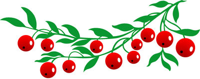 Cranberries Stock Illustrations.