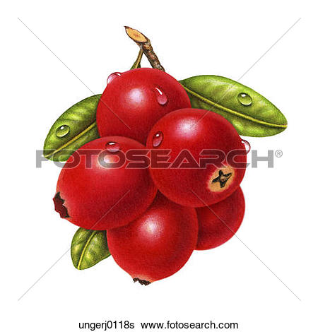 Stock Illustration of A Small Bunch of Cranberries ungerj0113s.