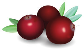 Cranberry clipart free.