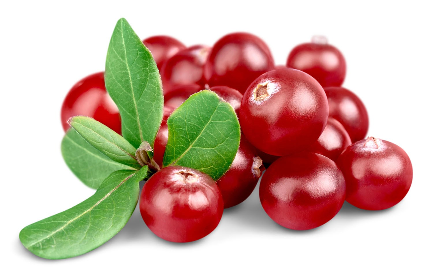 Cranberry Png (103+ images in Collection) Page 1.