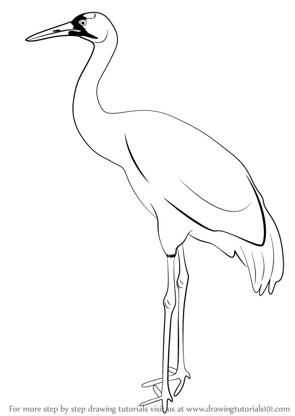 Learn How to Draw a Crane (Birds) Step by Step : Drawing Tutorials.