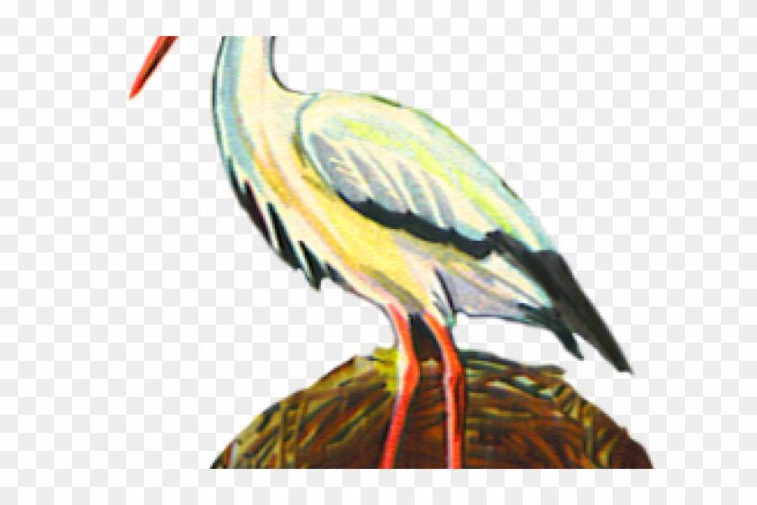 Sea Bird Clipart Crane Bird.