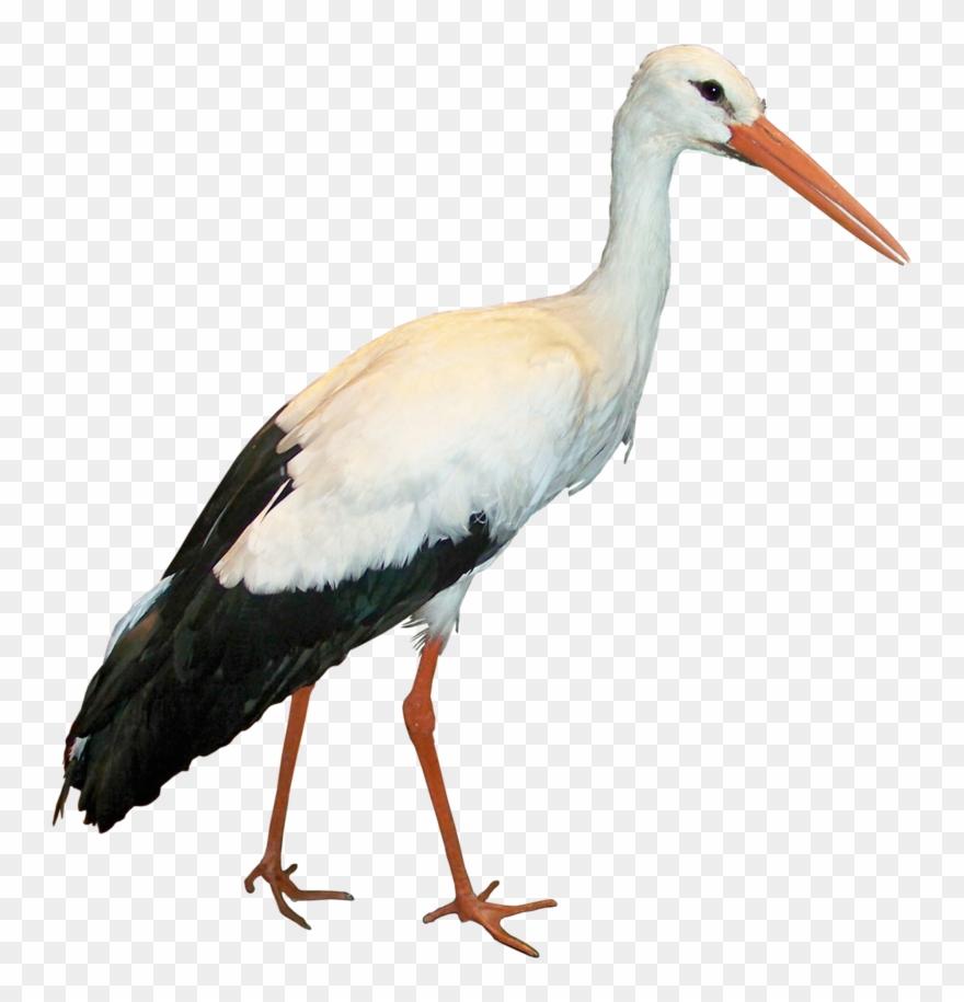 Crane Clipart Stork Bird.