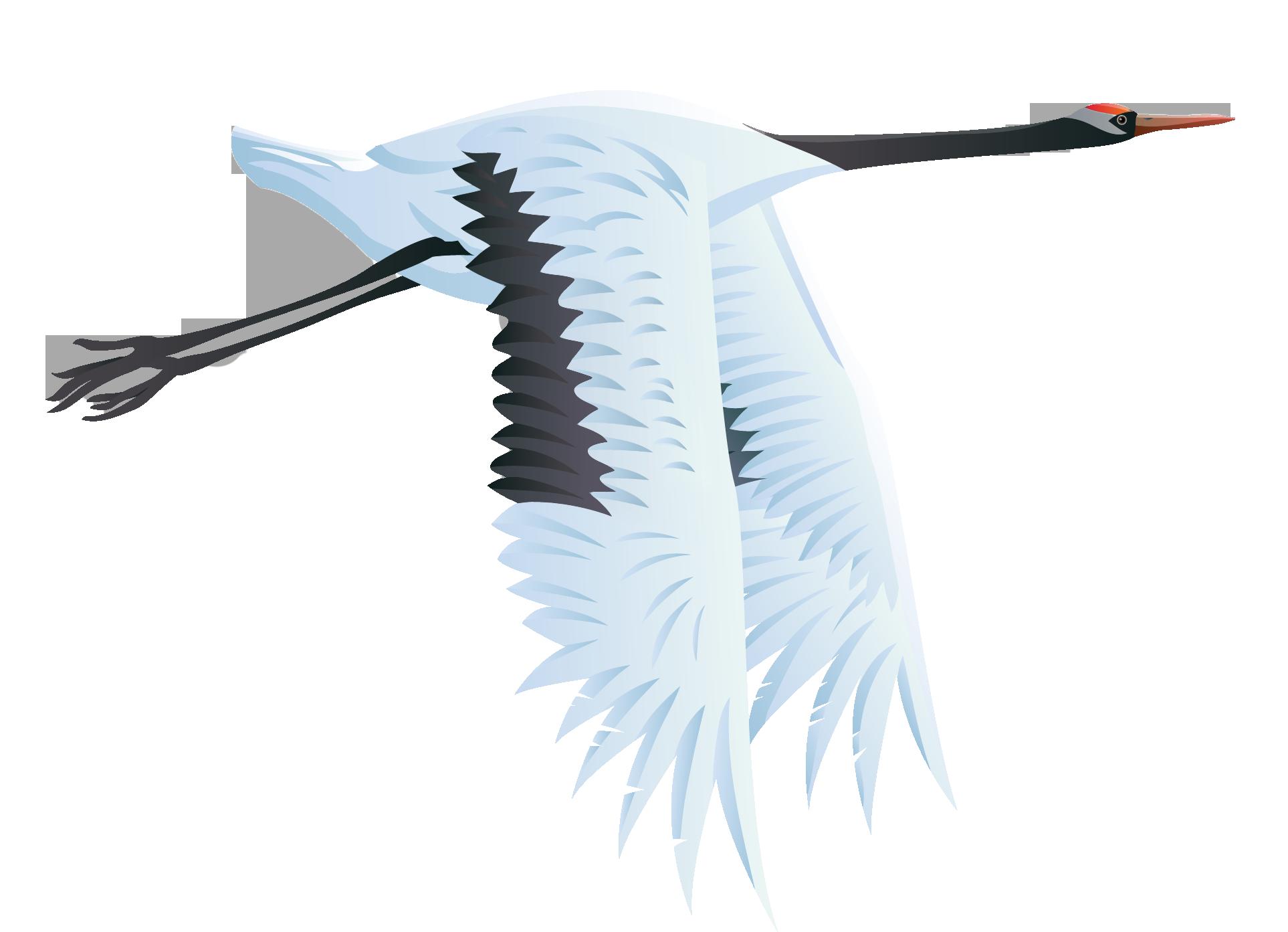 Large Bird Crane PNG Vector Clipart.