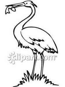 Black and White Crane Eating Fish.