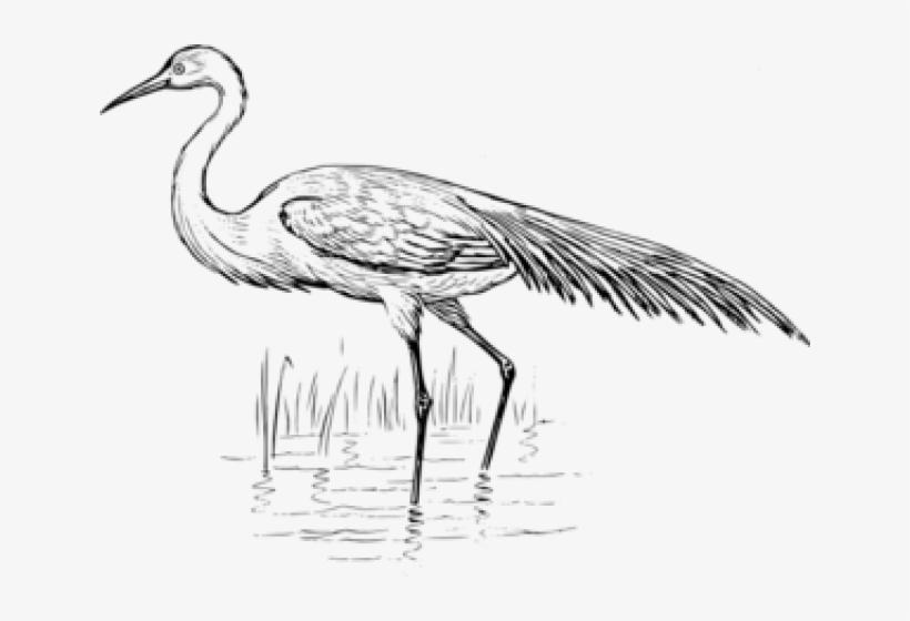 Egret Clipart Crane Bird.