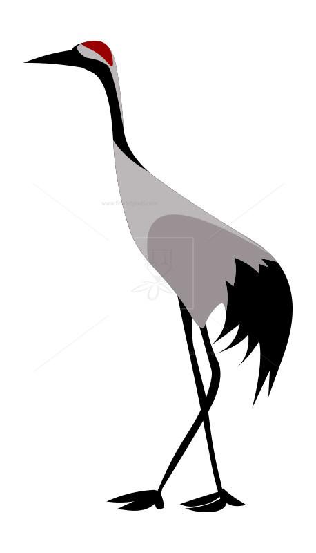 Crane bird.