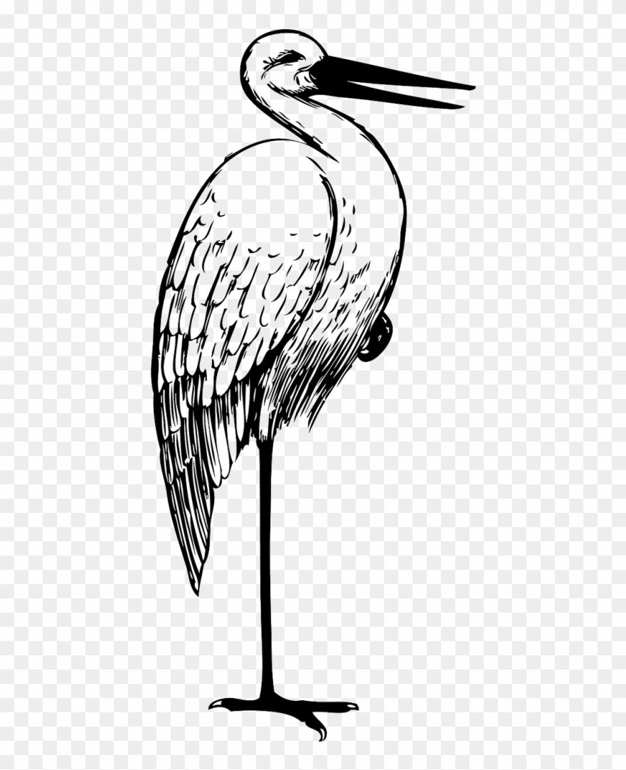 Free Download White Stork Crane Bird The Stork Clip.