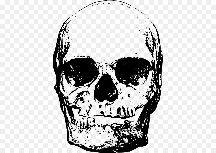 Human skeleton Skull Head.