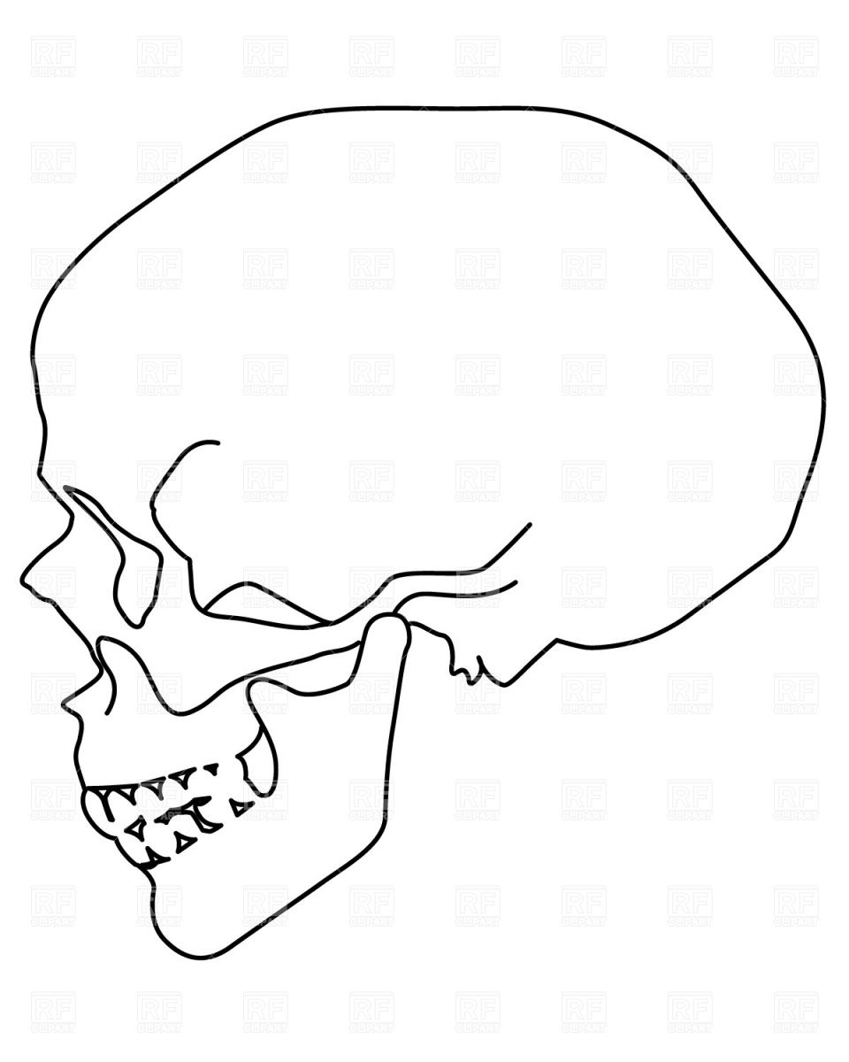 Human Skull Clipart.