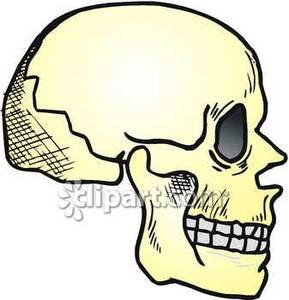 View Of A Human Skull.