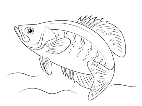 White Crappie coloring page.