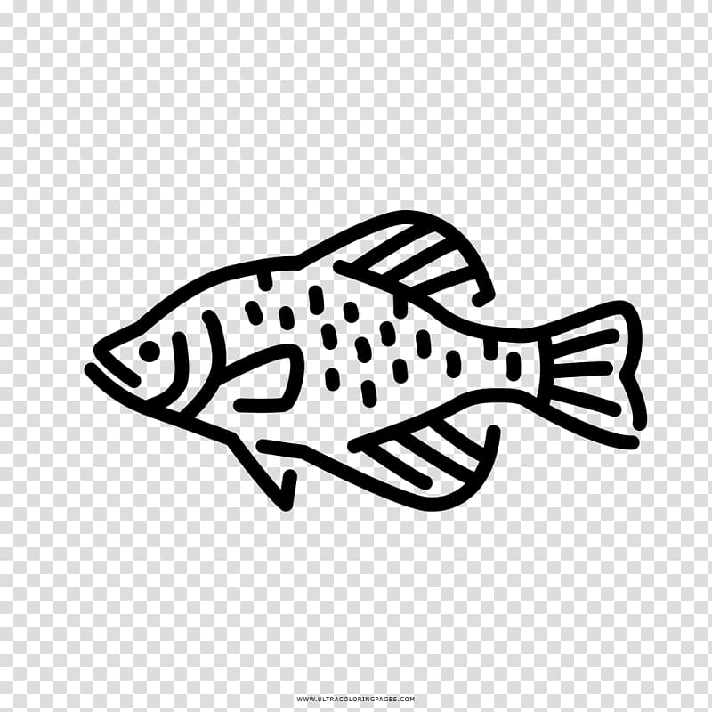Black crappie Freshwater fish Fresh water , others.