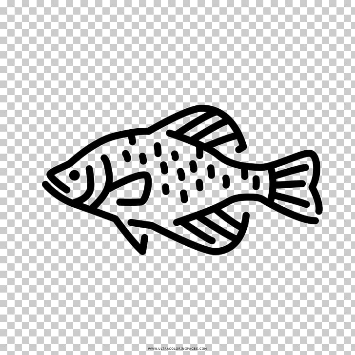 Black crappie Freshwater fish Fresh water , others PNG.