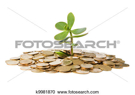 Stock Photography of Money Tree (crassula) growing from a pile of.