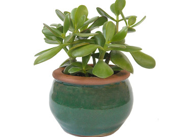 Crassula Ovata Jade Plant 16 Tall in a Black Hexagonal by Window27.