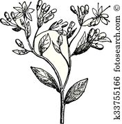 Crassulaceae Clipart Vector Graphics. 22 crassulaceae EPS clip art.