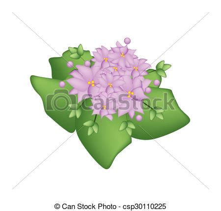 Crassulaceae Stock Illustration Images. 25 Crassulaceae.