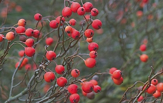 Nurseryman's favourites: December.