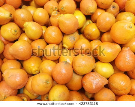 Tecojote Winter Fruit Called Crataegus Pubescens Stock Photo.