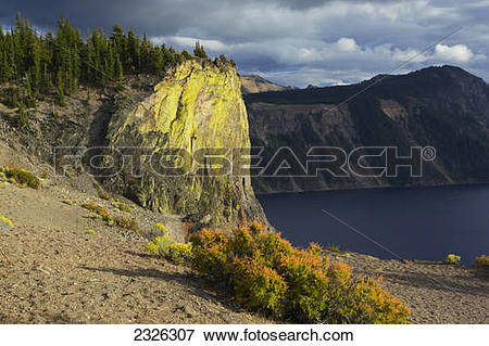 Picture of Lichen on crater rim, Crater lake, Oregon 2326307.