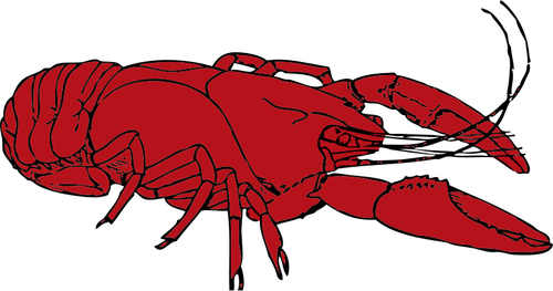 Red crayfish vector clip art.