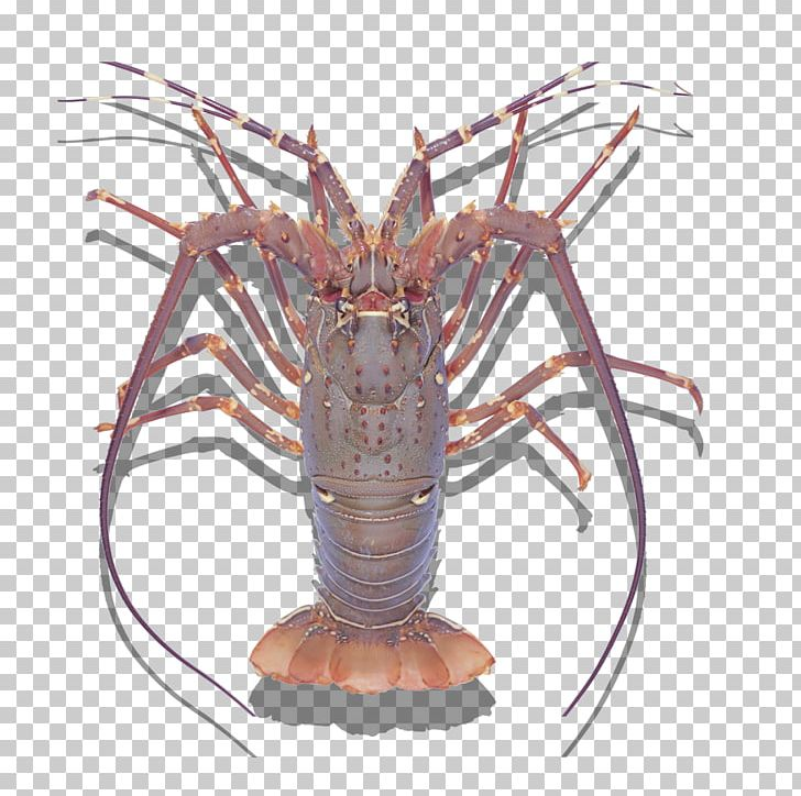 Seafood Crab Lobster Palinurus Elephas Shrimp PNG, Clipart.
