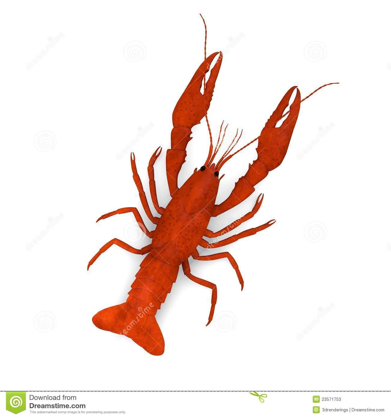 Crayfish Stock Illustrations.