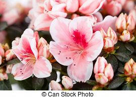 Stock Photographs of Blossoming cream.